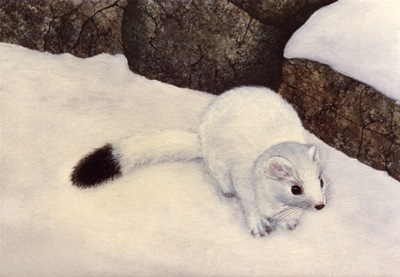 Ermine, Ermine In Winter, oil painting by Frank Wilson