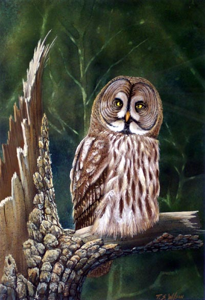Great Gray Owl, owl painting by Frank Wilson, gouache painting
