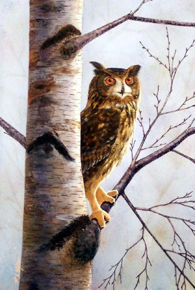 Owl in Birch, owl painting by Frank Wilson, gouache painting