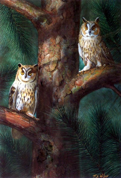 Owls In Moonlight, owl painting by Frank Wilson, gouache painting